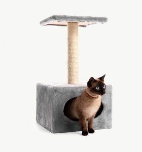 I nostri gatti possono essere educati?