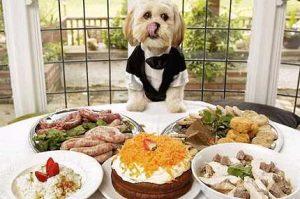 La gestione alimentare del cane
