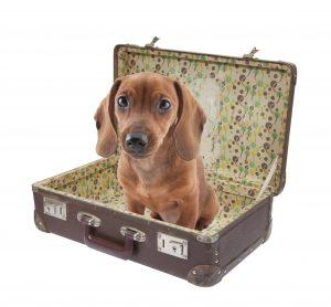 Viaggiare con il vostro animale